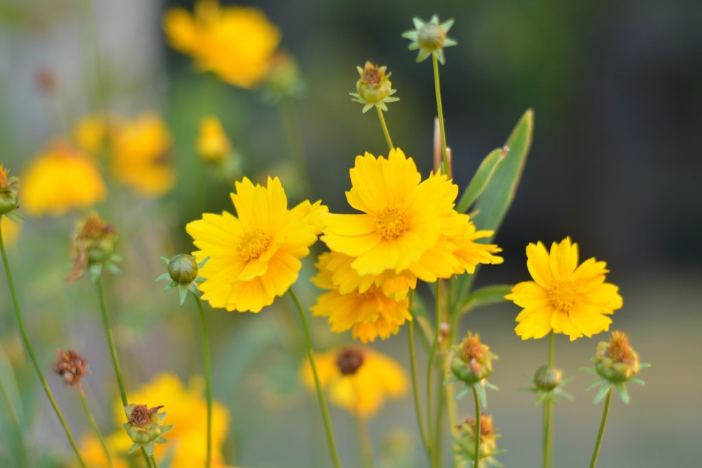 Красою квітів серце взяте у полон