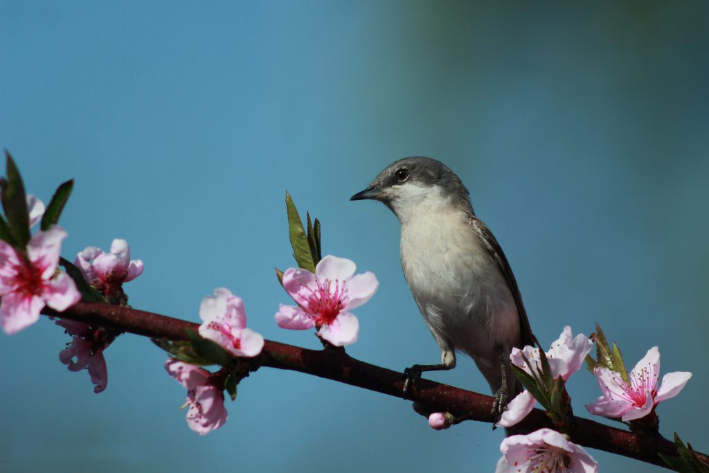 Весна настає