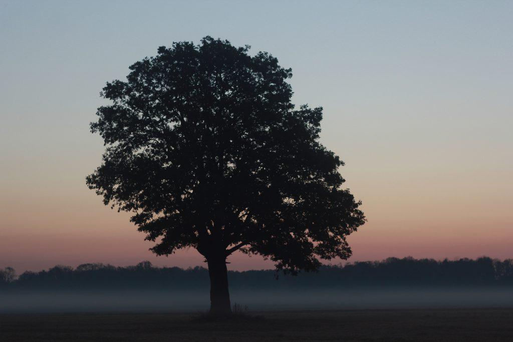 Посади дерево, зроби вклад в майбутнє