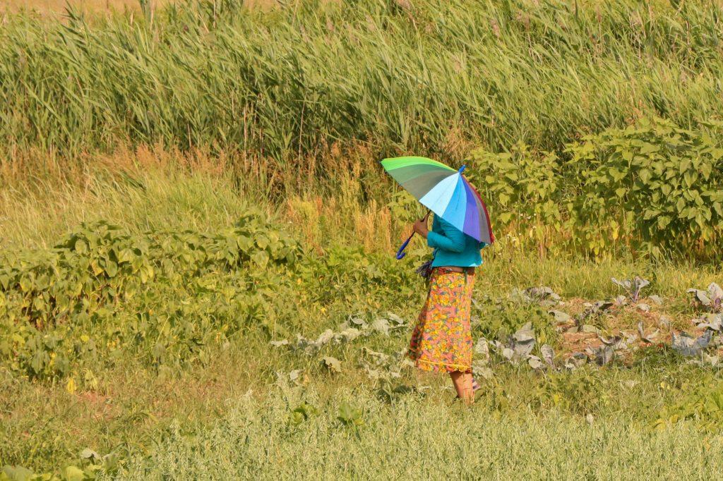Вiдпочинок пiд парасолькою в спекотний день у полi