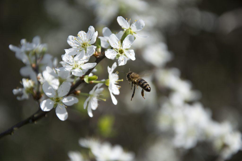 Праця бджоли