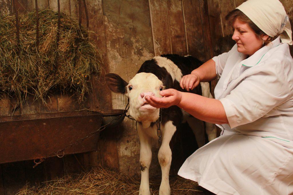 Ветеринарка – жінка в чоловічій професії