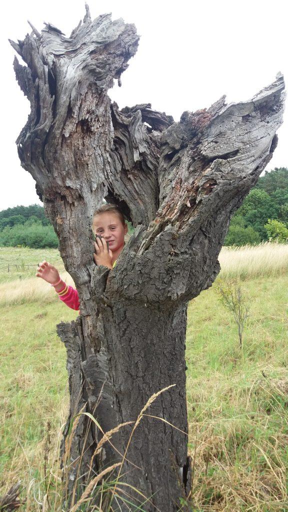 Гра в дерево