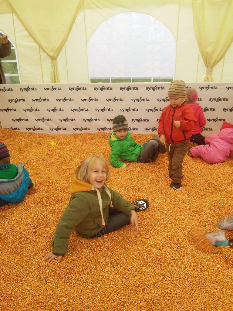 Діти кукурудзи