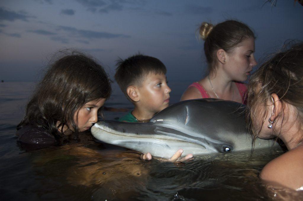 SOS!Врятуйте дельфінів