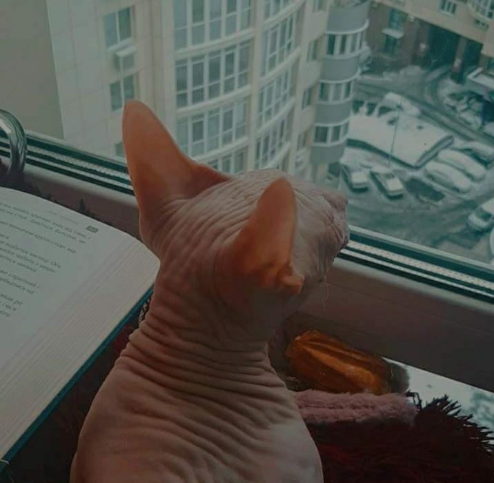 Коту лячно